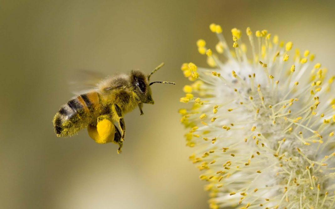 Alergia la polen – la timpul trecut