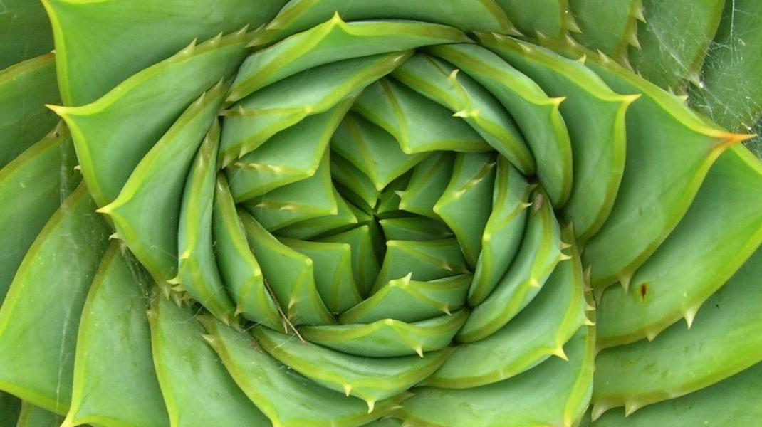 Spirala, o formă geometrică surprinzător de des întâlnită în natură, ce ascunde secrete dumnezeiești nebănuite